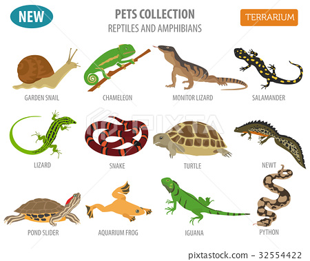 Pet reptiles and amphibians icon set flat style  32554422