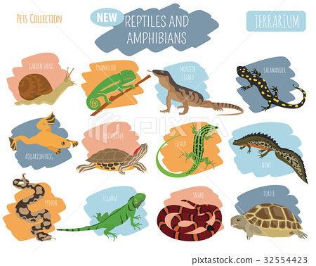 Pet reptiles and amphibians icon set flat style  32554423