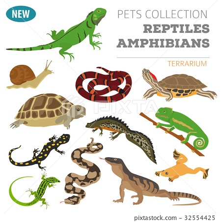 Pet reptiles and amphibians icon set flat style  32554425