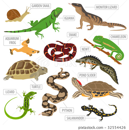 Pet reptiles and amphibians icon set flat style  32554426