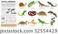 reptile, amphibian, pet 32554429