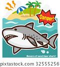 鯊魚 海 大海 32555256