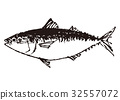 고등어, 물고기, 생선 32557072