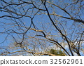 景观 景色 风景 32562961