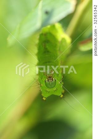 生物昆蟲,綠色的頭是歧視點之一。紅色動物群有一張紅臉 32565342