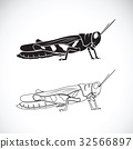 Vector of grasshopper on white background. 32566897