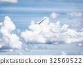 Bird in the sky 32569522