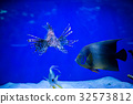 Tropical fish Lion fish, corals. underwater world 32573812