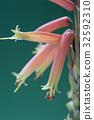 botanic, botanical, plant 32592310
