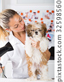 Vet with his dog Shih Tzu 32598560