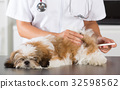 Vet with his dog Shih Tzu 32598562