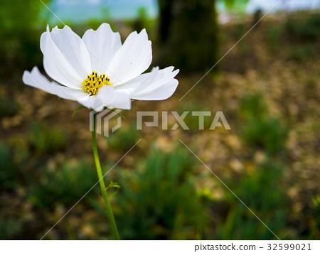 flower 32599021
