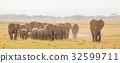 Herd of wild elephants in Amboseli National Park 32599711