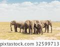 Herd of wild elephants in Amboseli National Park 32599713