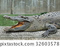 Crocodile with open mouth 32603578