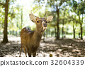 Deer in the park 32604339
