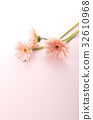 非洲菊 花朵 花 32610968