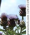 karudon, perennials, kana 32614319