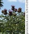 ฤดูร้อน,หน้าร้อน,ดอกไม้ 32614320