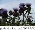 ฤดูร้อน,หน้าร้อน,ดอกไม้ 32614322