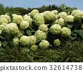 花朵 花卉 花 32614738