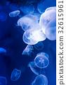 jellyfish, aquarium, mistic 32615961