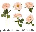 Isolated Rose flower set on white background 32620066