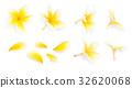 Yellow frangipani flower set with Petals on white  32620068