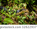 africa, bush, jungle 32622937