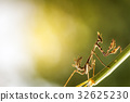 mantis in beautiful magical background 32625230
