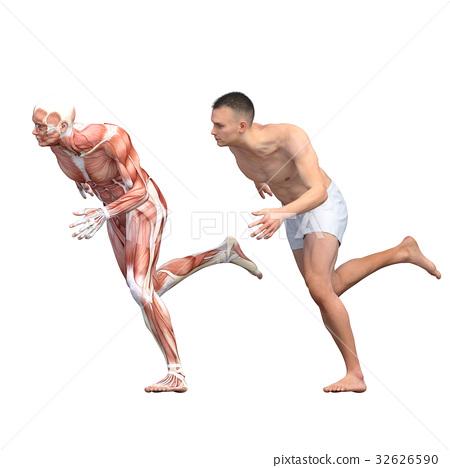 男性解剖学肌肉3DCG例证材料 32626590