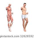 男性解剖學肌肉3DCG例證材料 32626592