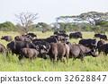 buffalo, African, animal 32628847