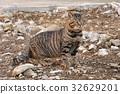 毛孩 貓 貓咪 32629201