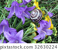 Thornhill snail on wildflowers 2017 32630224