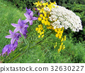 Thornhill wildflowers July 2017 32630227