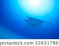 魟魚 黃貂魚 海底的 32631786