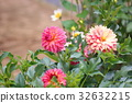 bloom blossom blossoms 32632215
