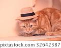 cat, neko, pussy 32642387