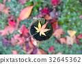 紅葉 楓樹 紅楓 32645362