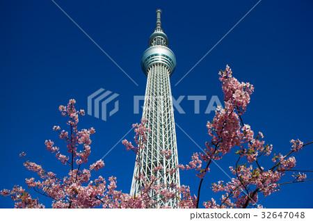 sky Tower 32647048