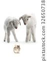 goat 32650738