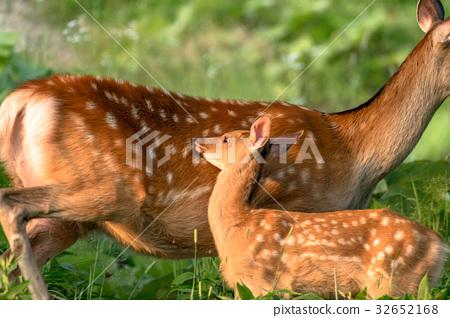 에조 사슴 모자 1 32652168
