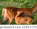 에조 사슴 모자 2 32652170