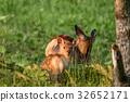에조 사슴 모자 3 32652171