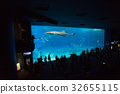 aquarium, blue water, marine 32655115