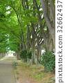 光叶榉 柱廊 街道树 32662437