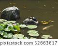 거북이가 사는 연못 32663617
