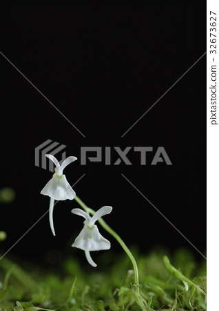 carnivorous plant, insectivorous plant, blank expression 32673627