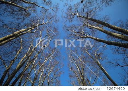 樹 32674490
